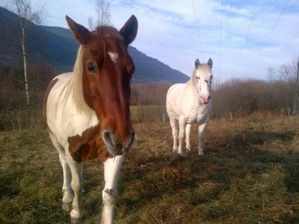 CALINOU  - ONC poney - né en 1999 - adopté en novembre 2012 par Stéphanie - Page 4 Calino16
