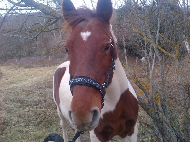 CALINOU  - ONC poney - né en 1999 - adopté en novembre 2012 par Stéphanie - Page 4 Notre-10