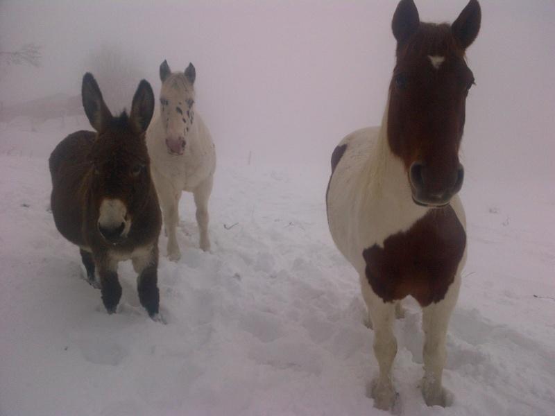 CALINOU  - ONC poney - né en 1999 - adopté en novembre 2012 par Stéphanie - Page 4 Notre-11