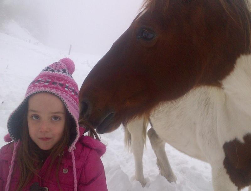CALINOU  - ONC poney - né en 1999 - adopté en novembre 2012 par Stéphanie - Page 4 Notre-12