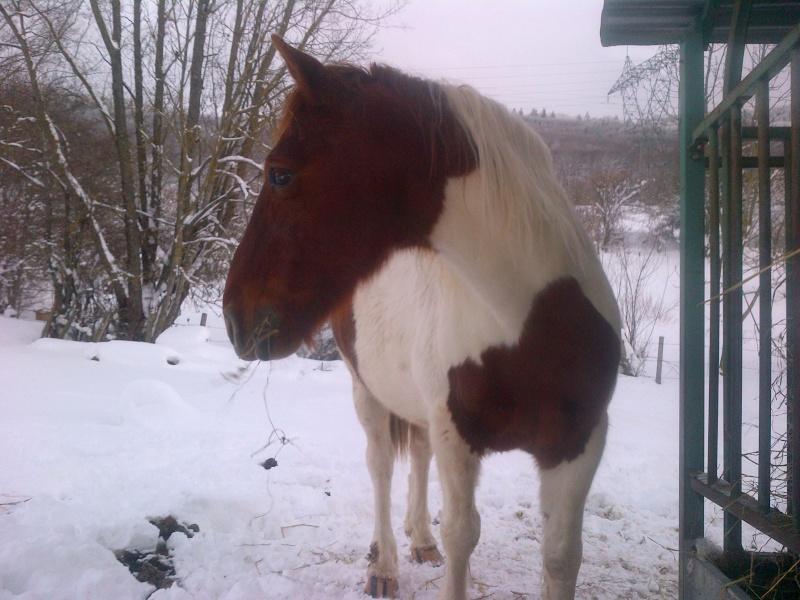 CALINOU  - ONC poney - né en 1999 - adopté en novembre 2012 par Stéphanie - Page 5 Notre-14