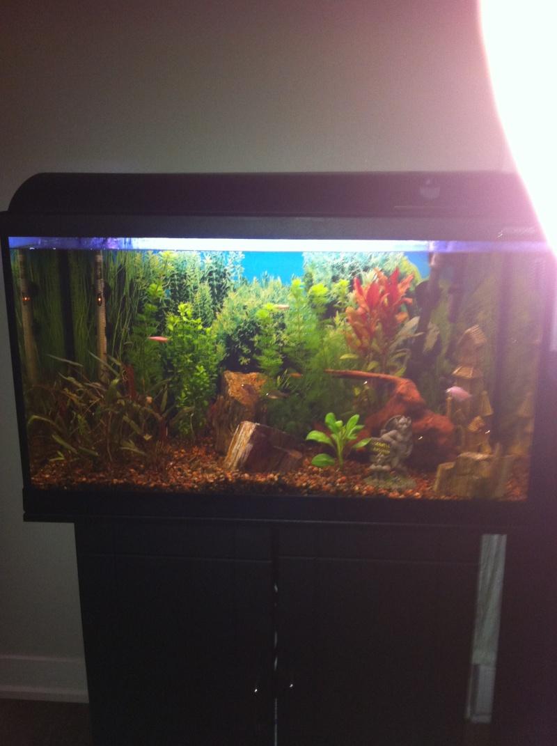 Mon aquarium 06210
