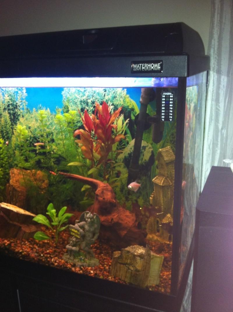 Mon aquarium 06310