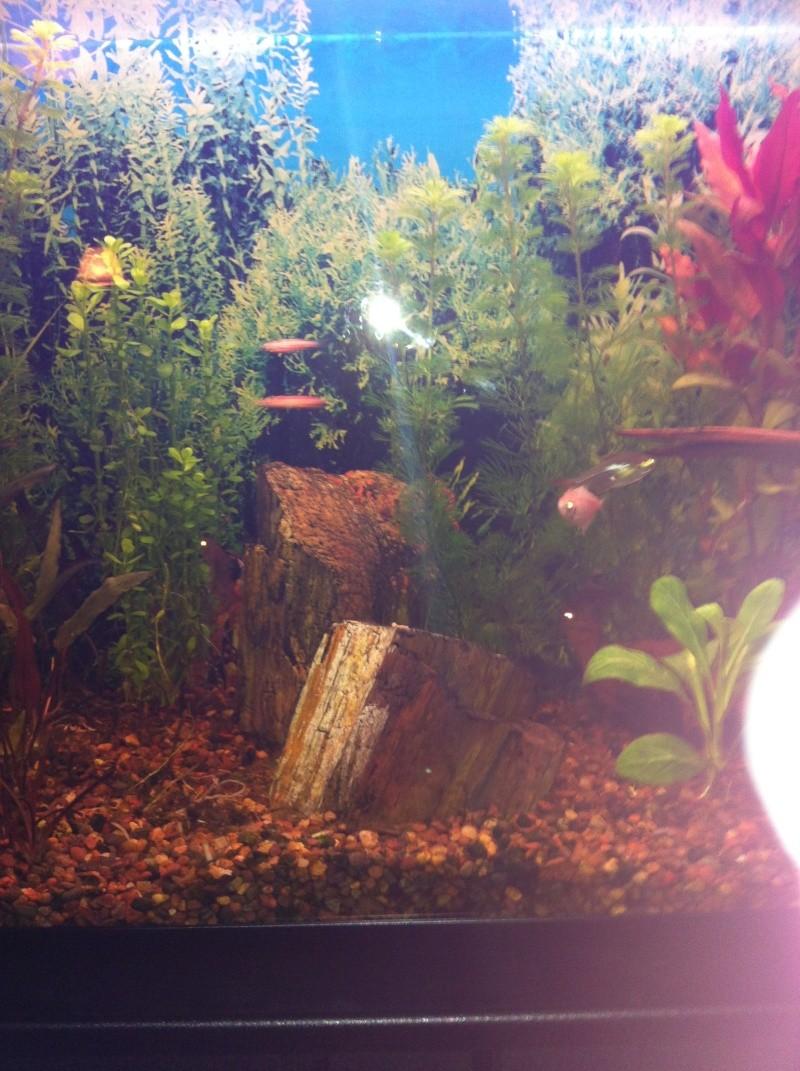 Mon aquarium 06410
