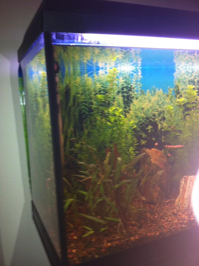 Mon aquarium 06510