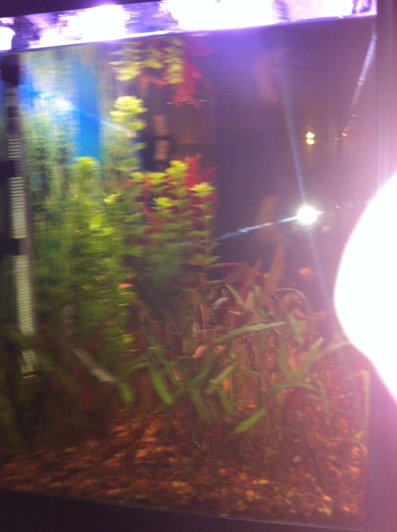 Mon aquarium 06610