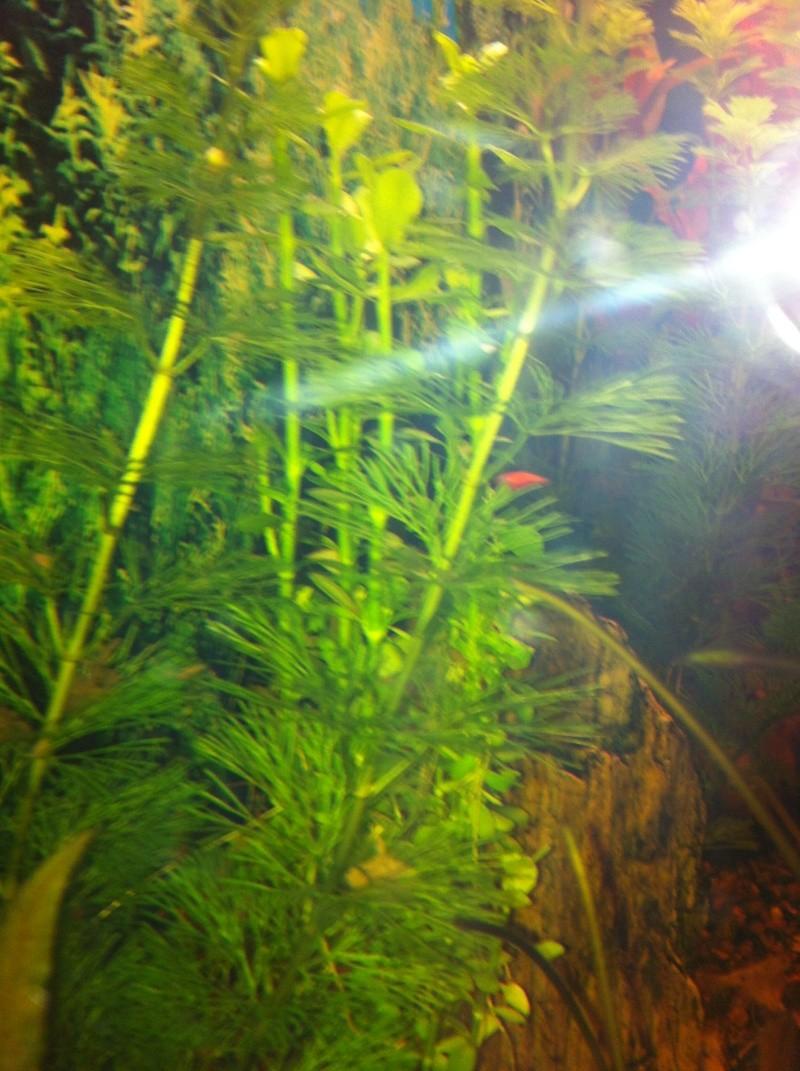 Mon aquarium 06810