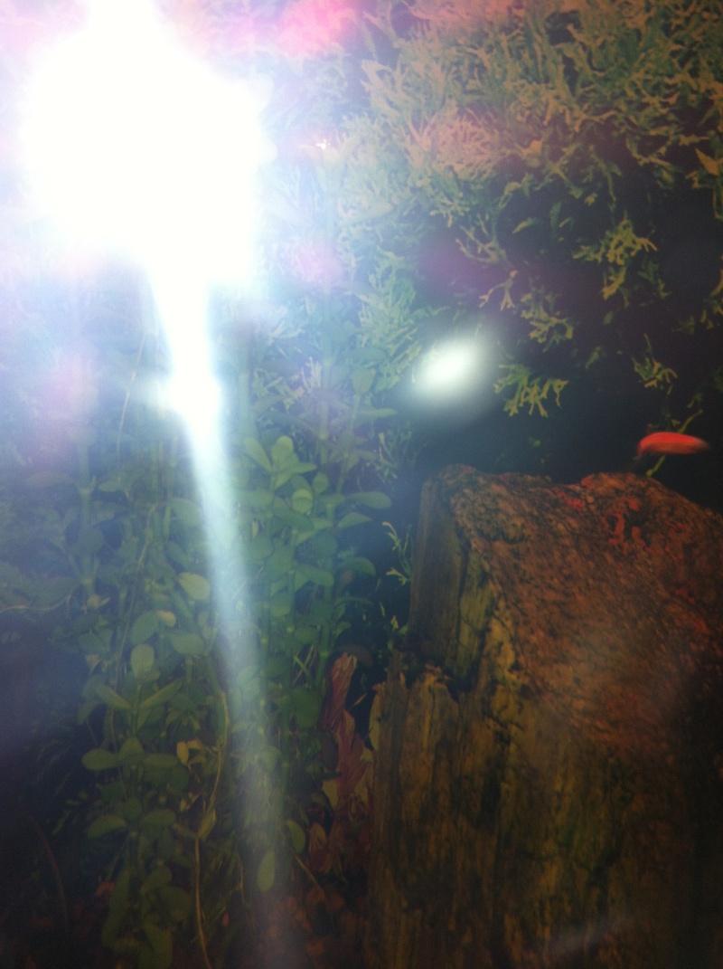 Mon aquarium 06910