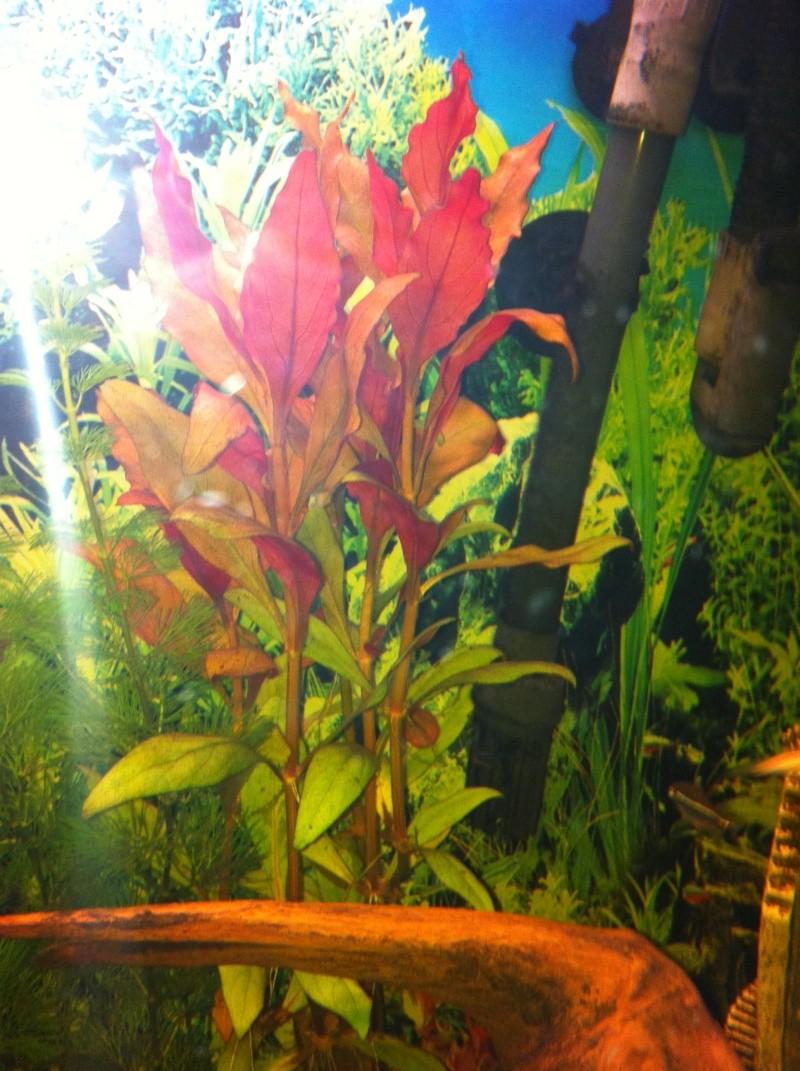 Mon aquarium 07110