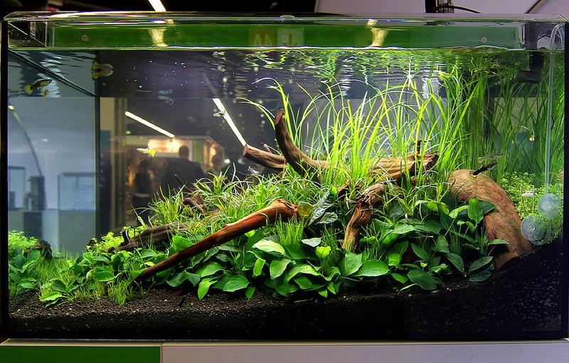 Décoration pour aquarium de séparation. 72524010
