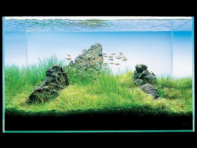 Décoration pour aquarium de séparation. Galler10