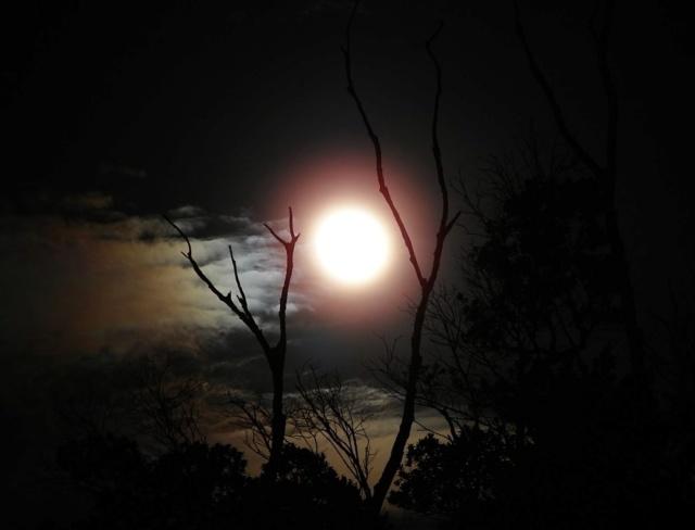 bonzour bonne zournée et bonne nuit notre ti nid za nous - Page 39 Img_8519