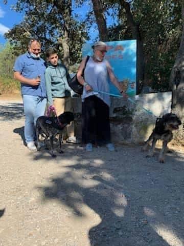 LOUISON - x griffon bleu de Gascogne 6  ans  (5 ans de refuge) - Refuge Spa Les Murailles à Nimes (30) 11000210