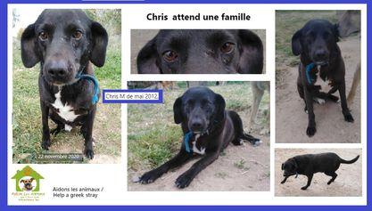 CHRIS -  9 ans (9 ans de refuge)  Asso Aidons les Animaux - PYRGOS (Grece) A14