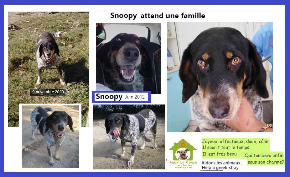 SNOOPY -  type petit bleu de Gascogne ?  8 ans (8 ans de refuge) actuellement en fa en Suisse   Aidons les Animaux  Pyrgos (Grèce) A16