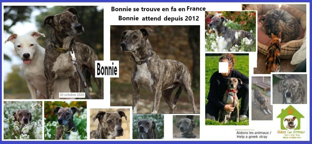 BONNIE en  FA en France - Asso Aidons les Animaux à Pyrgos (Grèce) A24