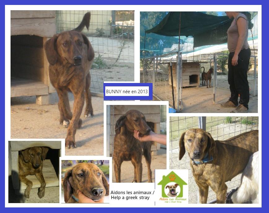 BUNNY F 2013 - Asso Aidons les Animaux à Pyrgos (Grèce)  A25