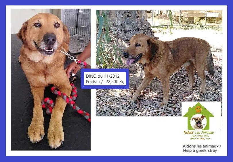 DINO de 2012 - Asso Aidons les Animaux à Pyrgos (Grèce)  A27