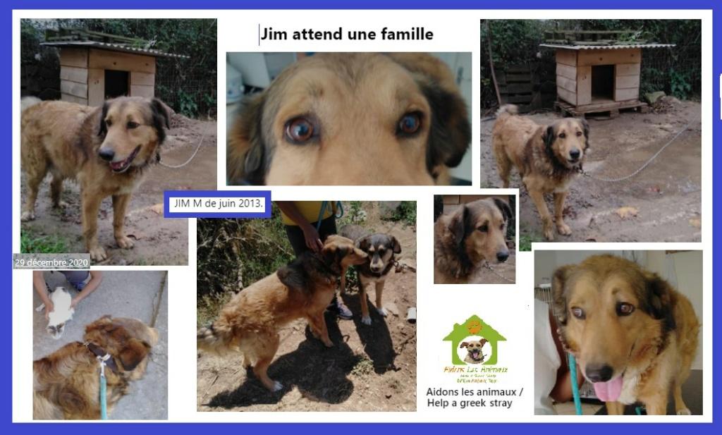 JIMm - x berger ? 8 ans (8 de refuge)  Asso Aidons les Animaux à Pyrgos (Grèce)   A33