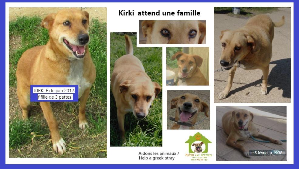 KIRKI - x labrador ? F de 2012 - Aidons les Animaux - Pyrgos (Grèce) en fa en Suisse  A34