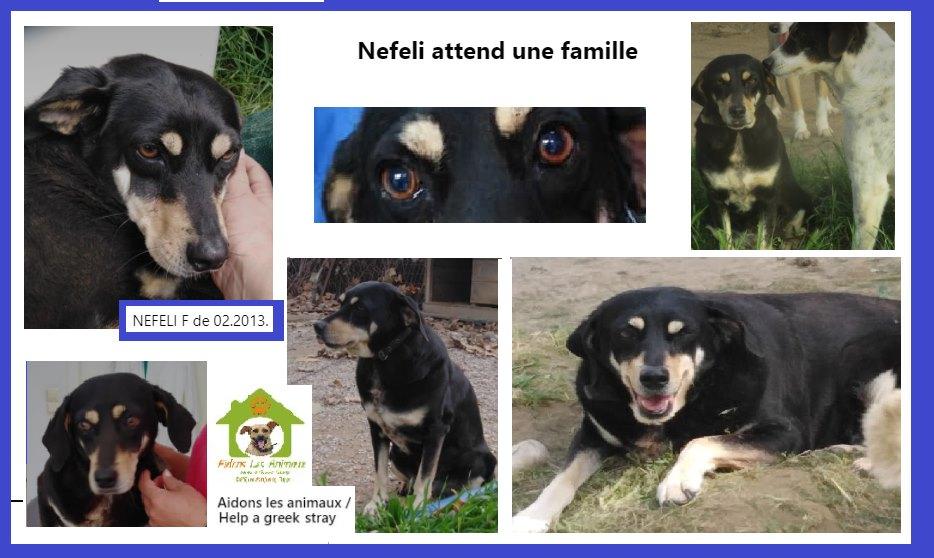 NEFELI F de 2013 - Aidons les Animaux - Pyrgos (Grèce) A36