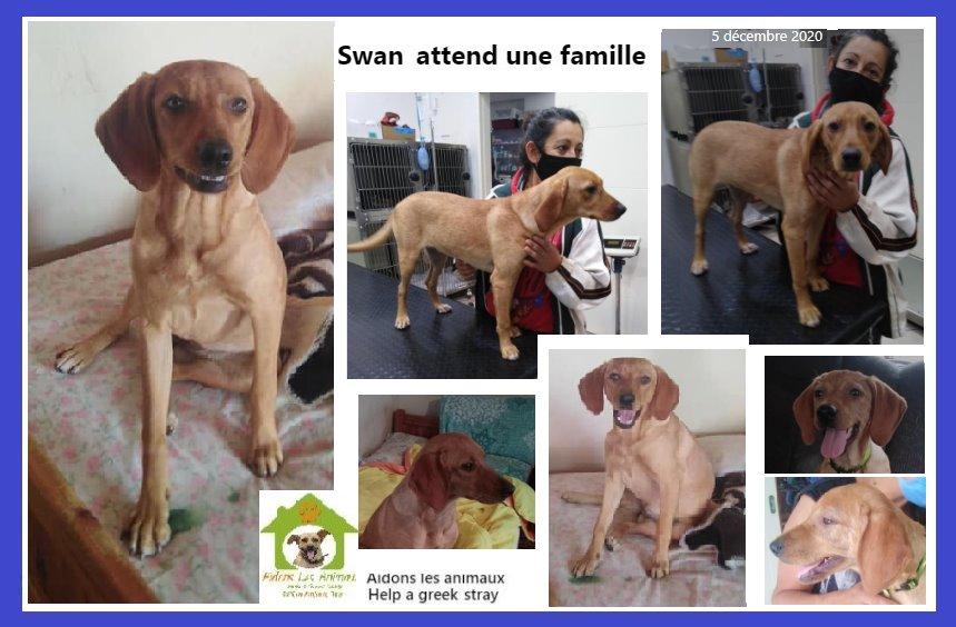 SWAN F de 2020 - Aidons les Animaux - Pyrgos (Grèce) A41