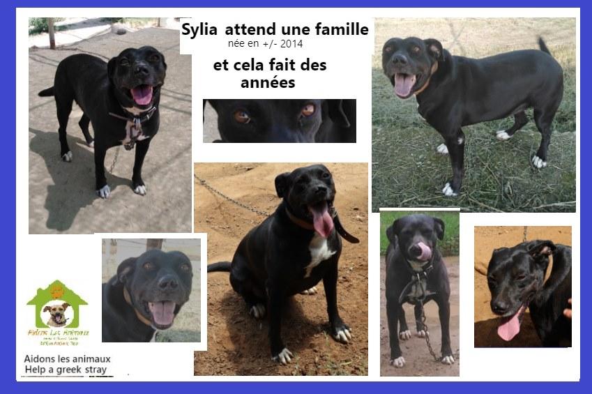 SYLIA F de 2014 - Aidons les Animaux - Pyrgos (Grèce) A42