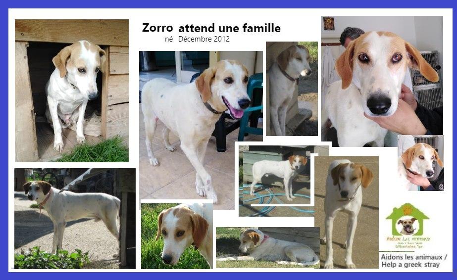 ZORRO - 9 ans (8 ans de refuge) - Aidons les Animaux - Pyrgos (Grèce) A45