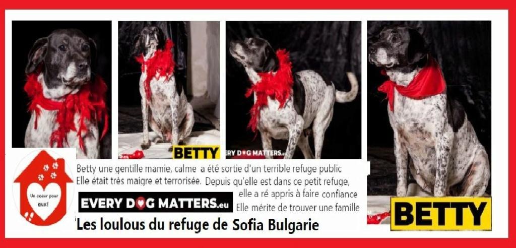 BETTY - x braque/épagneul ? 8/9 ans - Asso Un Coeur pour eux - les Loulous de l'Est - Sofia (Bulgarie) Betty10