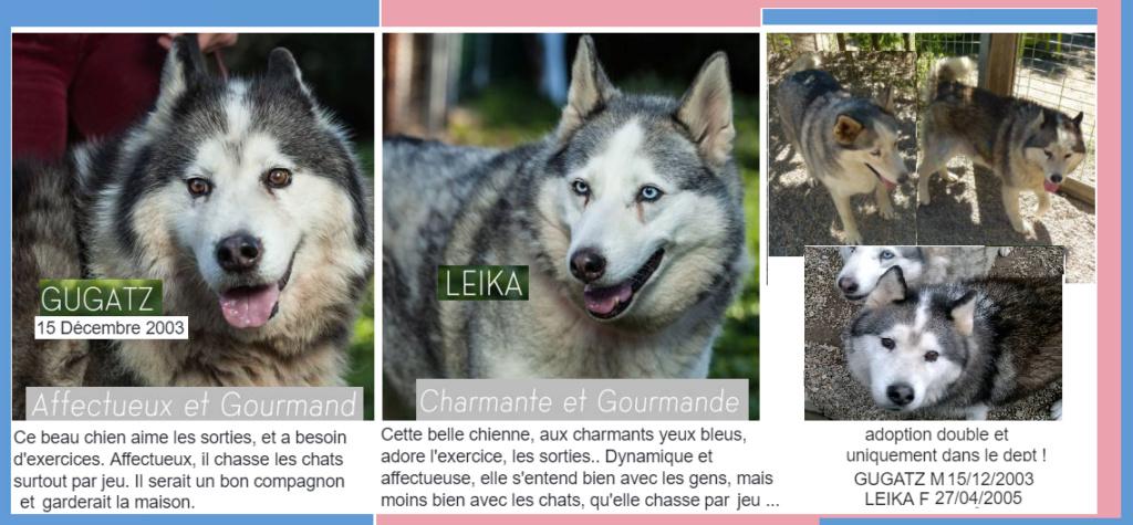 sos panier retraite LEIKA 15 ans - husky  (10/11 ans de refuge) - Spa les Murailles à Nimes (30) Captur16