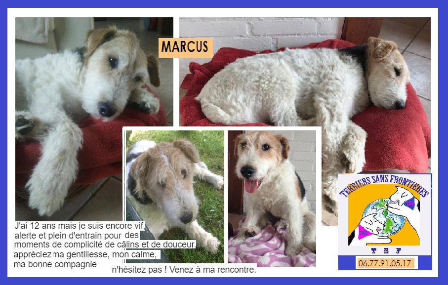 MARCUS - fox terrier 12 ans - Terriers sans Frontières (10) Captur17