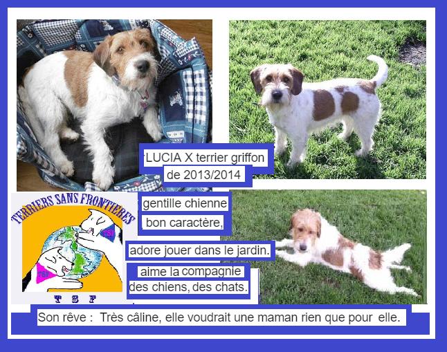 LUCIA - fox terrier 5 ans - Asso Terriers sans Frontières  Captur18
