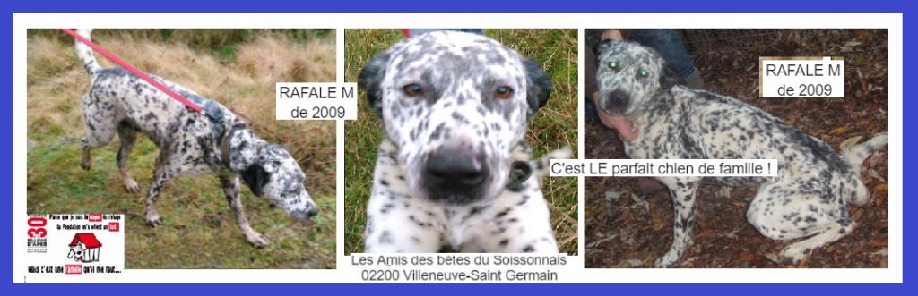 RAFALE - x dalmatien 11 ans (10 ans de refuge) Les Ams des Betes du Soissonnais à  Villeneuve Saint Germain (02) Captur28