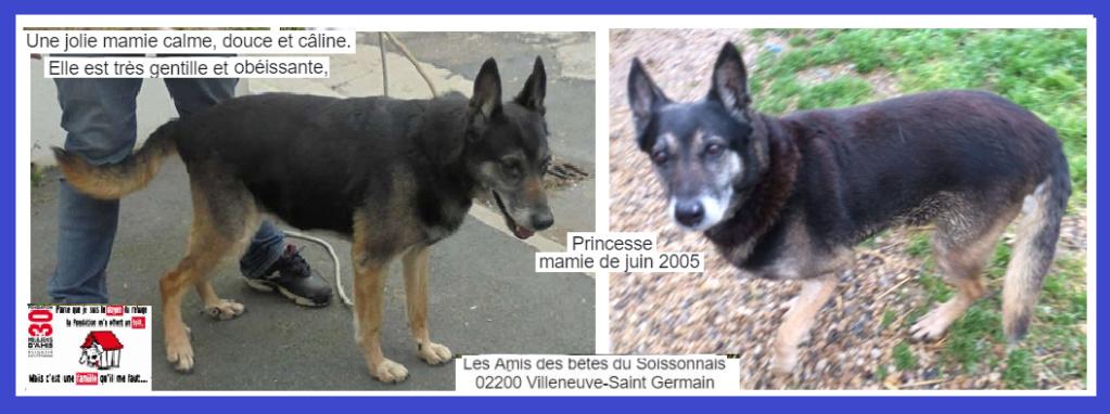 PRINCESSE - berger allemand 15 ans (3 ans de refuge)  - Les Amis des Betes du Soissonnais à Villeneuve Saint Germain (02) Captur29