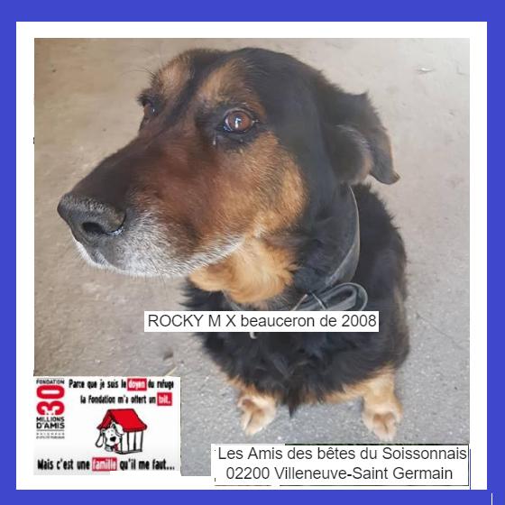 ROCKY - x beauceron 10 ans (5 ans de refuge)  Les amis des betes du Soissonnais à Villeneuve Saint Germain (02) Captur31
