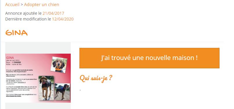 GINA - x chasse/(bruno du Jura ) 9 ans (3 ans de refuge)  - Refuge Spa Les Murailles à Nimes (30) Captur33