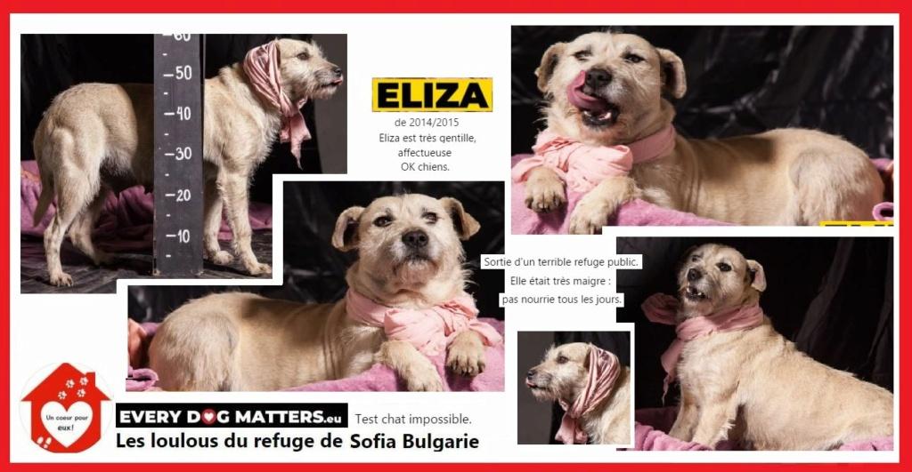 ELIZA - x griffon ? 6/7 ans - Asso un coeur pour eux - Les loulous del'est - Sofia (Bulgarie) Eliza10