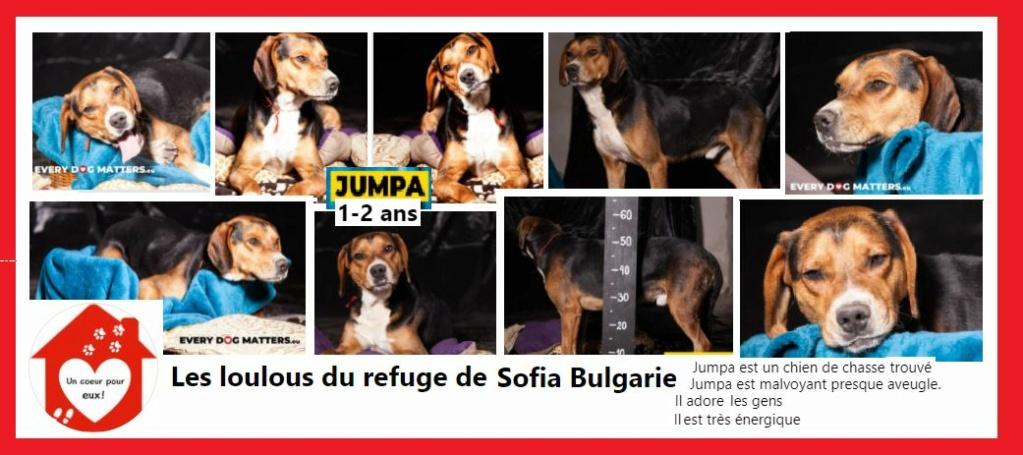 JUMPA - chien de chasse 2 ans - Asso Coeur pour eux - Les Loulous de l'est - Sofia (Bulgarie) Jumpa10