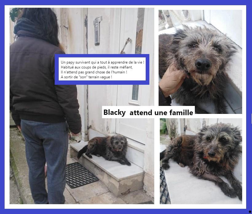 BLACKY - griffon 11 ans -  Errant du terrain vague- Asso Aidons les Animaux à Pyrgos (Grèce) Magas10