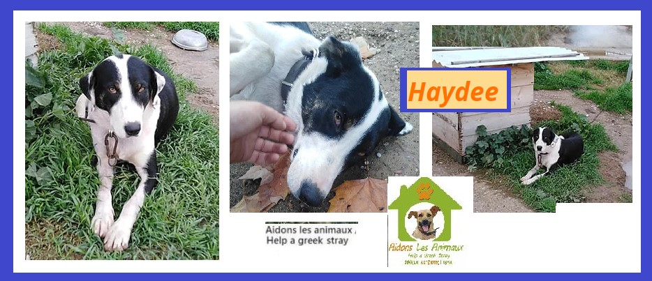 HAYDEE F 2019 - Asso Aidons les Animaux à Pyrgos (Grèce) Magas11
