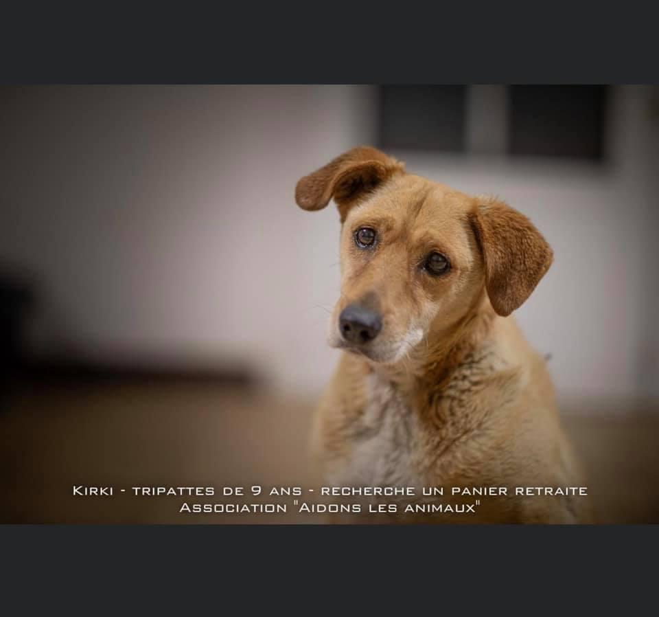KIRKI - x labrador ? F de 2012 - Aidons les Animaux - Pyrgos (Grèce) en fa en Suisse  X10