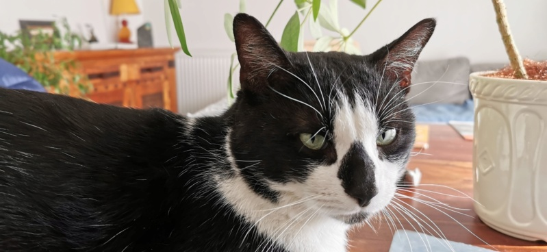 WELBY FIV+ Image010