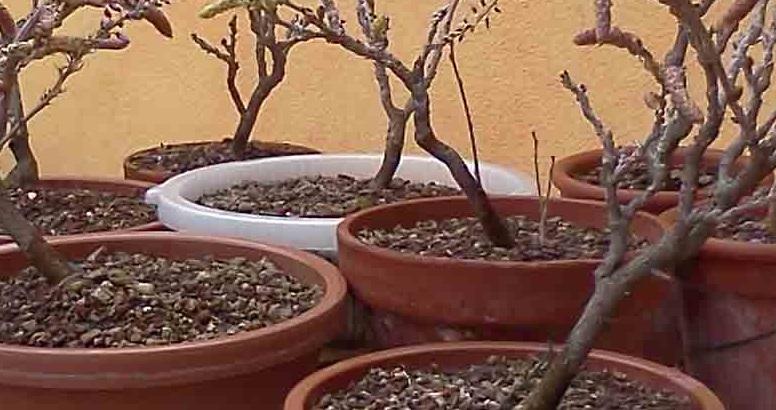 Vasi di coltivazione A10
