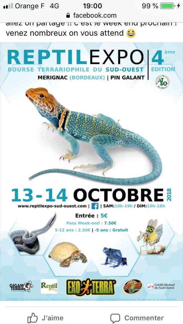 Reptilexpo Merignac (Bordeaux) 13 et 14 octobre 2018 5c6e5910