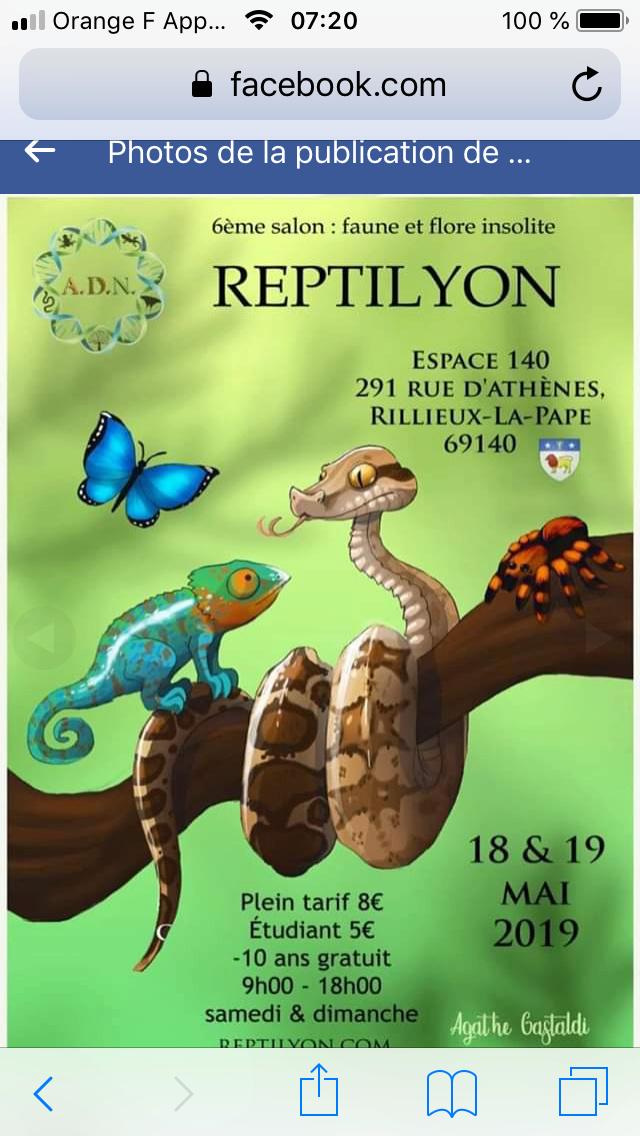 Reptilyon 18/19 mai 2019 E760ef10