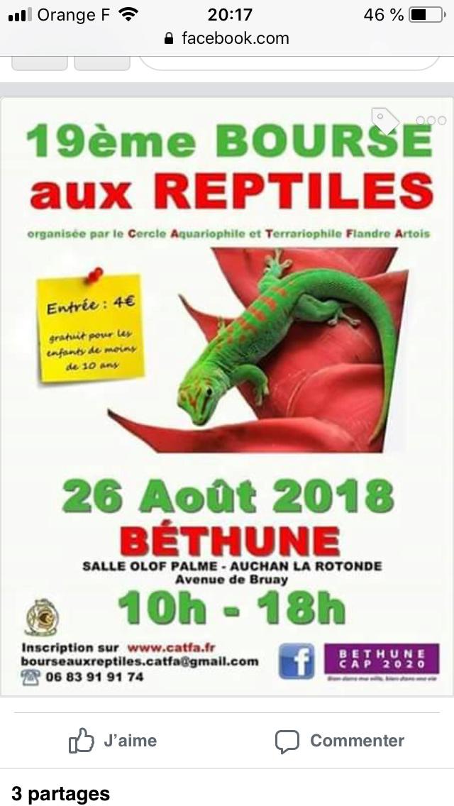 Bourse aux reptiles Bethune 26 août 2018 F8d28b10