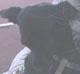 NORA - femelle croisée Chihuahua de 7 mois