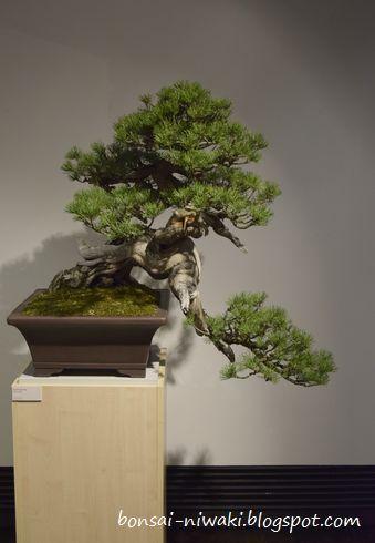 International Bonsai Exhibition - Nobuyuki Kajiwara & Friends (Poland,2018) _dsc0010