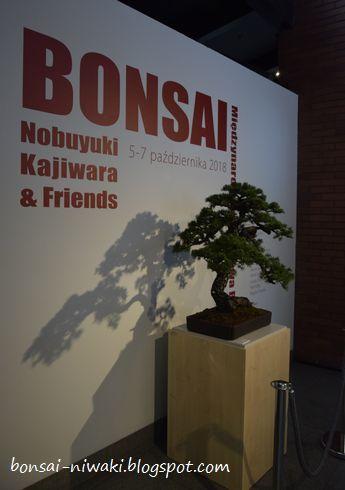 International Bonsai Exhibition - Nobuyuki Kajiwara & Friends (Poland,2018) _dsc0011