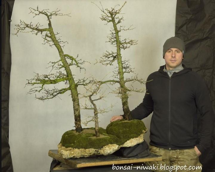 mini larix forest Larix_11